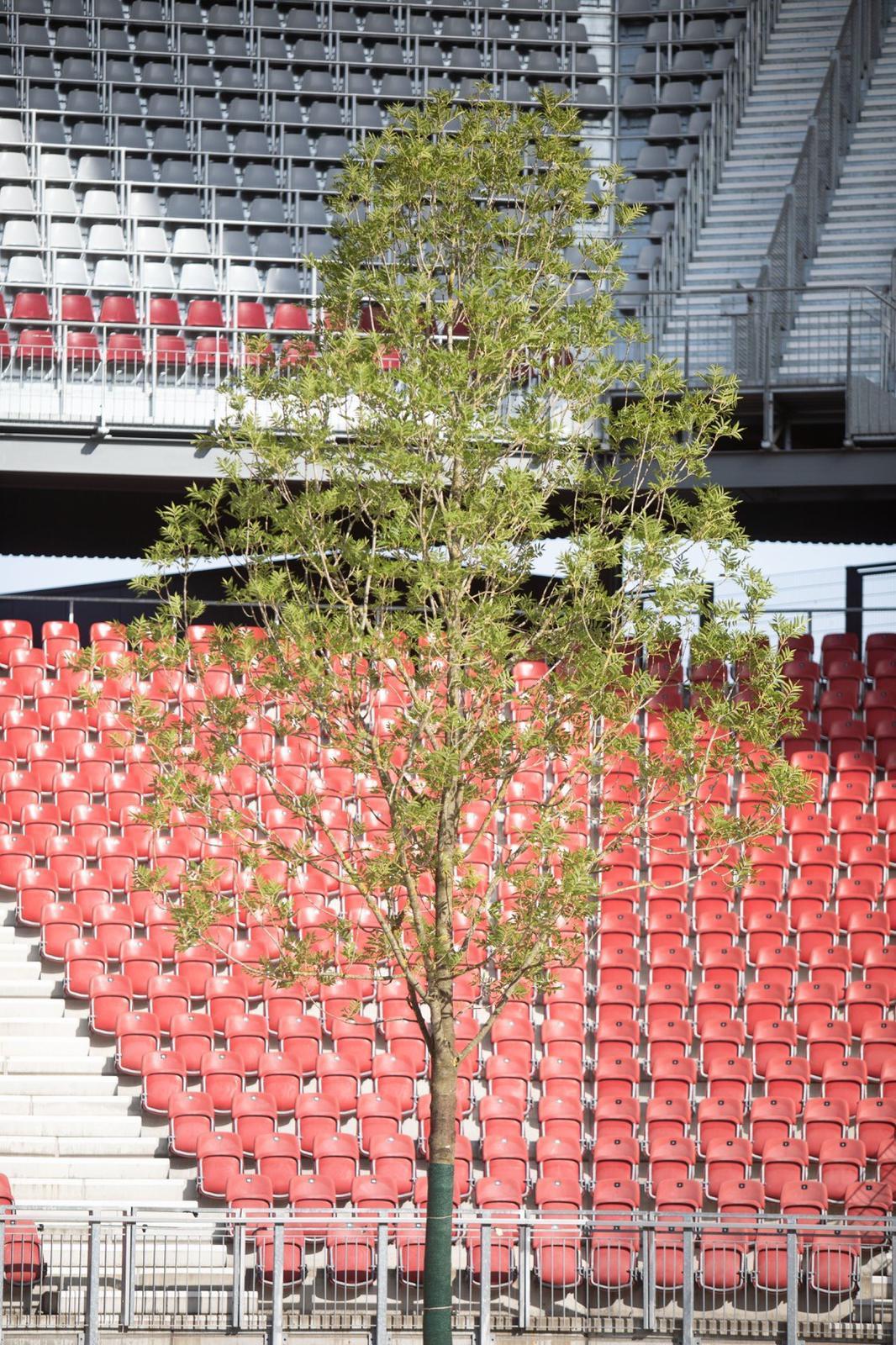 Baum Im Stadion Low Res Credit Gerhard Maurer